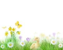 Beautiful spring background Stock Photo