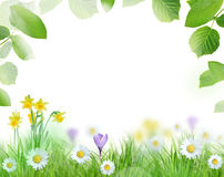 Beautiful spring background Royalty Free Stock Image