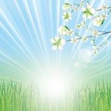 Beautiful spring background Royalty Free Stock Image