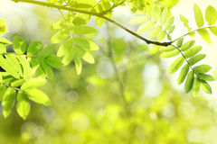 Beautiful spring background Royalty Free Stock Photo