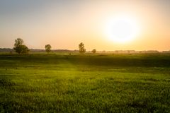 Beautiful spring  background field on sunset Royalty Free Stock Images