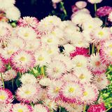 Beautiful spring background from flowers. Vintage retro style stock photography