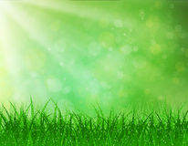 Beautiful  Spring background. Beautiful spring background with grass and bokeh lights. vector background summer design  green garden nature illustration. morning Royalty Free Stock Photo
