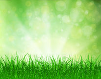 Beautiful  Spring background. Beautiful spring background with grass and bokeh lights. vector background summer design  green garden nature illustration. morning Stock Photos