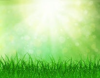 Beautiful  Spring background. Beautiful spring background with grass and bokeh lights. vector background summer design  green garden nature illustration. morning Royalty Free Stock Image