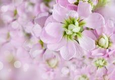 Beautiful spring background Royalty Free Stock Photo