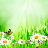 Beautiful spring backgrounds Stock Photography