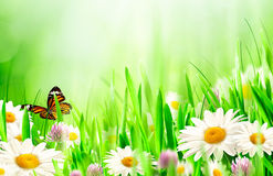 Beautiful spring backgrounds Stock Images