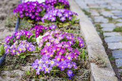 Beautiful spring blooming garden Royalty Free Stock Photo