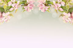 Beautiful Spring Blossoms Royalty Free Stock Images