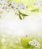 Beautiful spring bokeh for design with copyspace Stock Photo