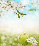 Beautiful spring bokeh for design with copyspace Stock Image