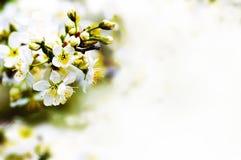 Beautiful spring bokeh Stock Photo