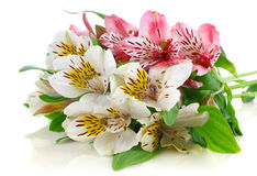 Beautiful spring bouquet with green leaves Stock Photos