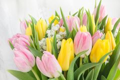 Beautiful spring bouquet of yellow and pink tulip on a white background with copy space for your spring wishes. Royalty Free Stock Photography