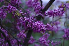 Beautiful Spring in the city royalty free stock images