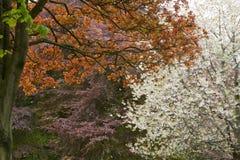 Beautiful spring colors Stock Photos