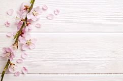 Beautiful spring composition with flowering blossoms on wooden background with copy space for text. Mother`s day greeting concept royalty free stock image