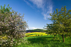 Beautiful spring countryside Stock Images