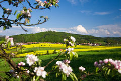 Beautiful spring countryside Royalty Free Stock Photos