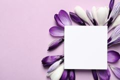 Beautiful spring crocus flowers and card on color background, top view. Space for text royalty free stock image