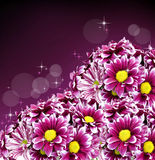 Beautiful spring daisy flowers Stock Image