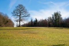 Killykeen forest, Co. Cavan, Ireland Royalty Free Stock Photo