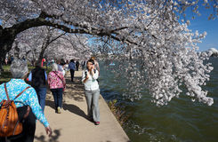 Beautiful Spring Day Stock Images