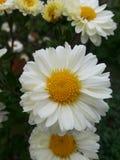 Beautiful spring details Royalty Free Stock Photos