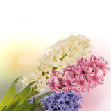 Beautiful spring exotic flower Stock Photos