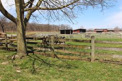Beautiful spring farm landscape in Illinois Royalty Free Stock Photos