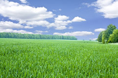Beautiful spring field Royalty Free Stock Photo