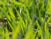 Beautiful spring field. Royalty Free Stock Photo