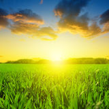 Beautiful spring field with green grass Stock Photos