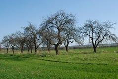 Beautiful spring field , landscape Stock Photos