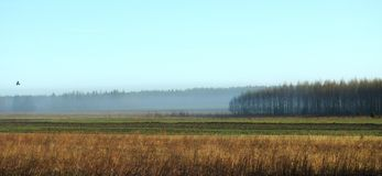 Field, bird, trees and morning mist, Lithuania royalty free stock photography