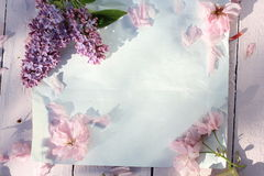 Beautiful, Spring floral background with Japanese cherry blooming flowers Royalty Free Stock Photo