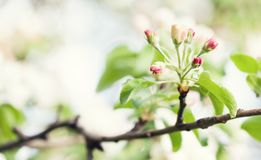 Beautiful spring floral nature landscape. Blossoming fruit tree branch in the garden, pink petal flowers. Soft focus Stock Photo