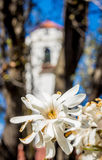 Beautiful spring flower with clock tower Royalty Free Stock Photo
