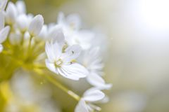 Beautiful spring flower stock photography