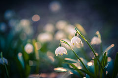 Beautiful spring flower with dreamy fantasy blurred bokeh background. Fresh outdoor nature landscape wallpaper. Stock Image