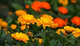A beautiful spring flower garden