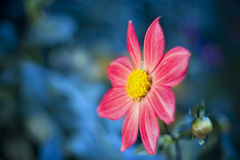 Beautiful spring flower. Soft selective focus Royalty Free Stock Photography