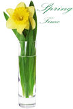 Beautiful spring flower in vase: yellow  narcissus (Daffodil) Stock Image