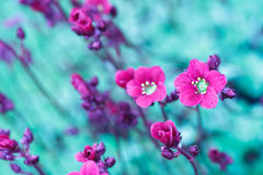 Beautiful spring flowers in abstract color tone Stock Photos