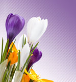 Beautiful spring flowers background Royalty Free Stock Photo
