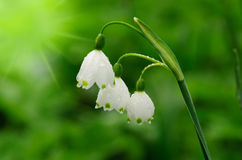 Beautiful spring flowers background royalty free stock images