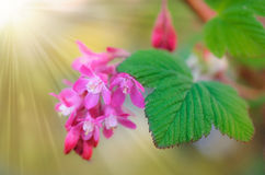Beautiful spring flowers background stock images