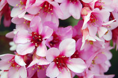 Beautiful spring flowers Royalty Free Stock Image