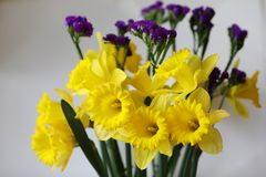 Yellow spring flowers easter holiday narcisus Stock Photography